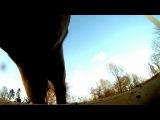 Лошадь прыгает, снято в интересном ракурсе :)